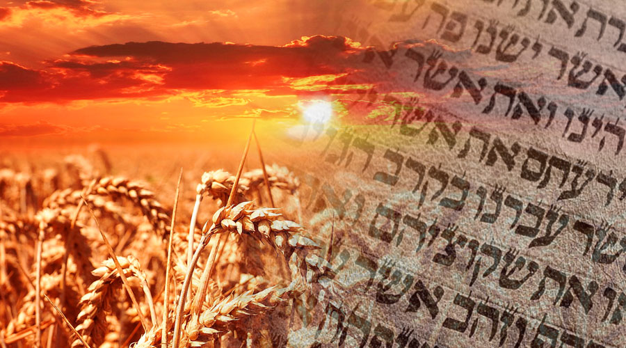 Shavuot—Rich with Prophetic Significance - Messianic Jewish Bible